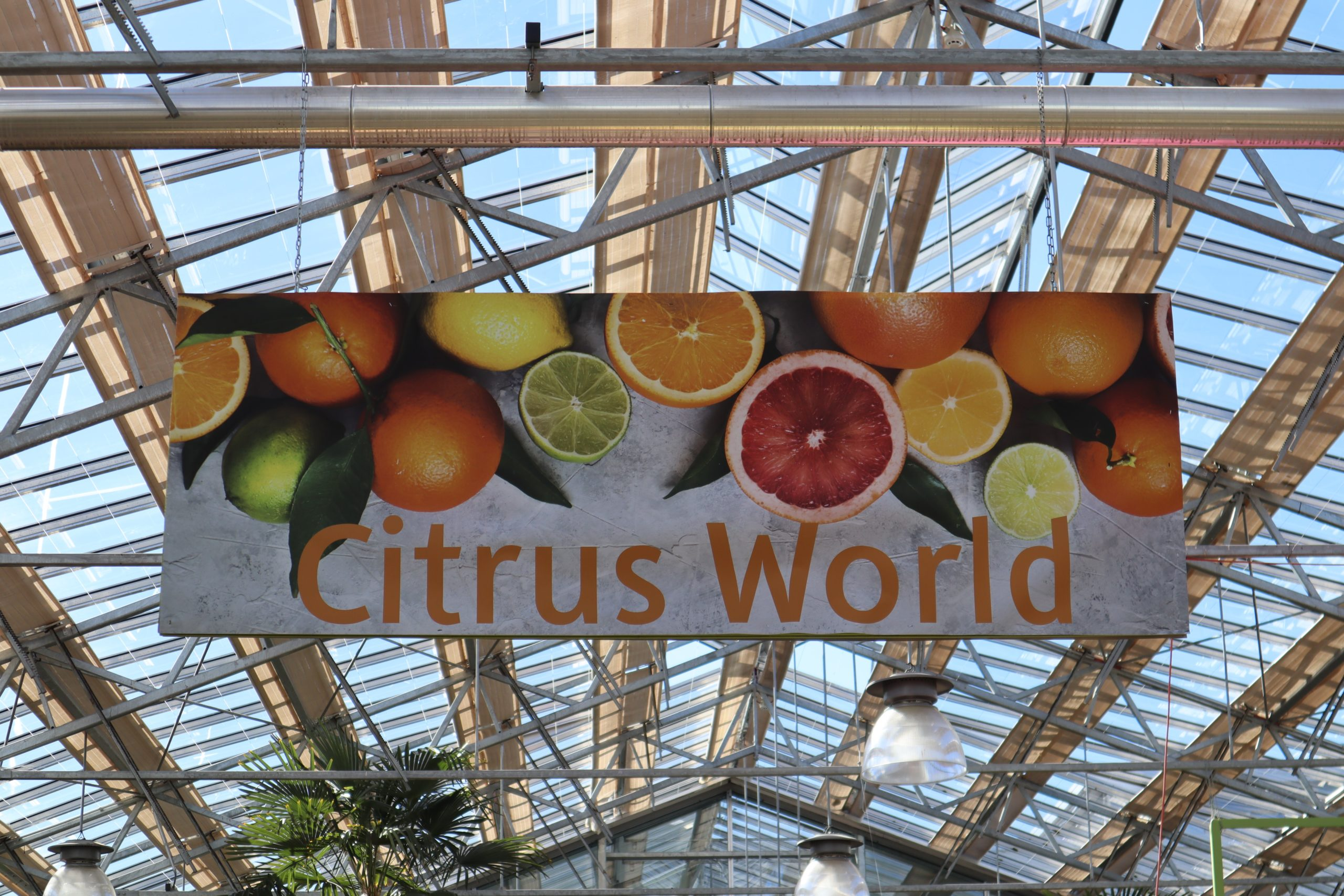 Citrus Wold im Gartencenter Meier