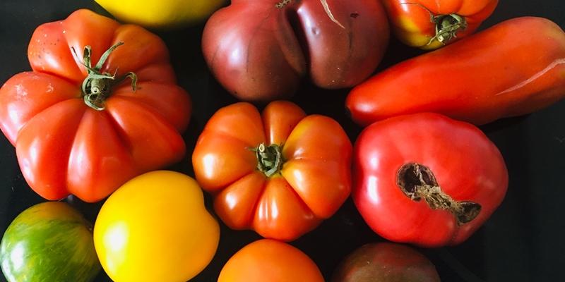 Verschiedene Tomatensorten in allen Farben